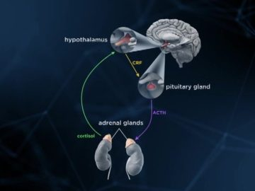 最先端ストレス学 心理学と生物学からのアプローチ